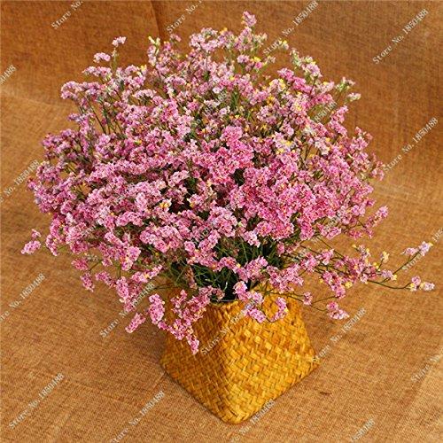 Valentine Semence vivace Bonsai Fleur Semence jardin Belles fleurs séchées Plante en pot ornemental d'intérieur 150 Pcs 10