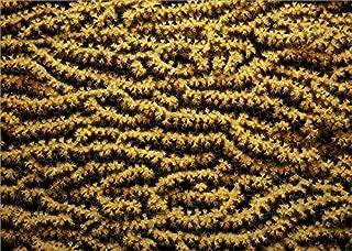 Media Storehouse 252 Piece Puzzle of Gorgonian sea Fan (Subergorgia mollis), Detail (18122161)