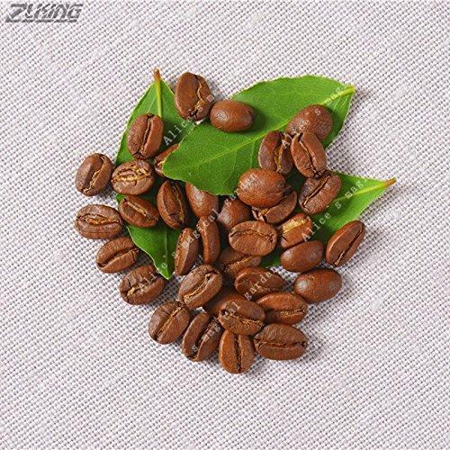 Zlking 20 Stücke Kaffeebohnen Kirsche Arabian Kakao Mit Aroma Frische Gesunde Natürliche Blumen Garten Seltene Tropische Samen Essbare Pflanzen