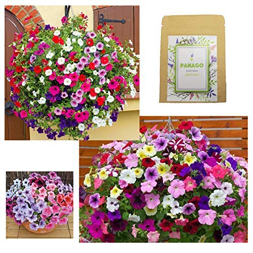 Petunias Seeds'Crazy Mixture' (Rainbow Colors) for Indoor & Garden Planting, 500 Non-GMO Perennial Potted Petunia Hybrida Vines/Flower Seeds