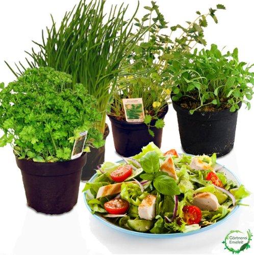 Salatkräuter-Set, 4 Frische Kräuter Pflanzen, Schnittlauch, Rucola, Pimpinelle & Petersilie