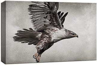 pointing hawk