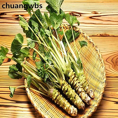 Pinkdose 100 piezas de plantas de Wasabi Rábano picante Vegetales Bonsai Vegetales DIY Home Garden Plantas