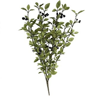 Best huckleberry plants for sale Reviews