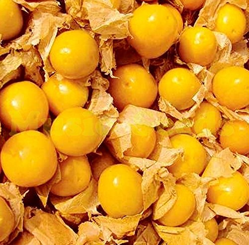 1bag = 30pcs BIG VENDUES HOT RARE chinois GRAINES Tomate cerise BONSAï EXOTIQUES GRAINES BIO FRUITS PLANTE Maison & Jardin