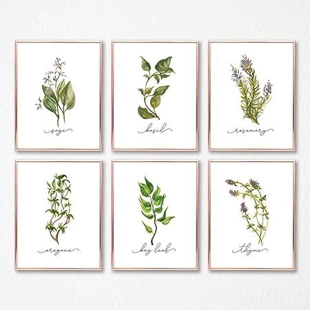 Sage Print Hand Drawn Herb Kitchen Wall Art Kitchen Herb Print Herbs and Spices