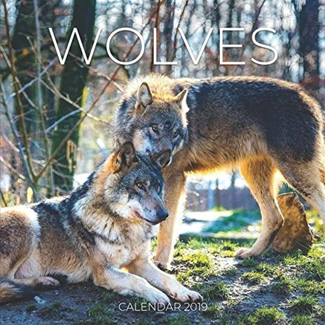 はげさらに細胞Wolves Calendar 2019: Mini Wall Calendar Wolf Photography 12 Month Calendar