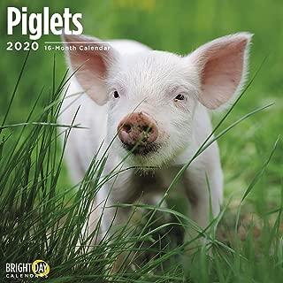 2020 Piglets Calendar 16 Month 12 x 12 Wall Calendar by Bright Day Calendars (Farm Animals Wall Calendar)