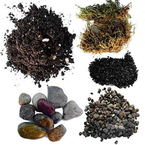 Succulent Planter Soil Kit - Total DIY Terrarium Supplies -Terrarium Kit for Succulent or Catcus - Create Your own Terrarium with These Supplies - Great for Fairy Gardens (Small)