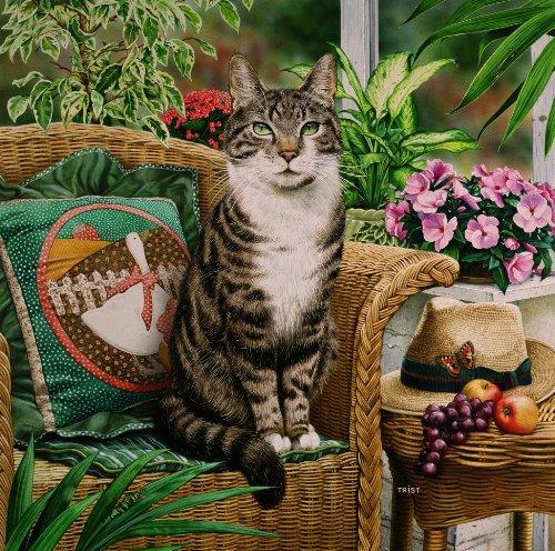 Hemingway, el gato Tabby de en la silla de mimbre en el conservatorio, tarjetas para felicitaciones de Geoff Tristram, tarjeta de felicitación para dimensiones de la funda de. 140 x 140 mm