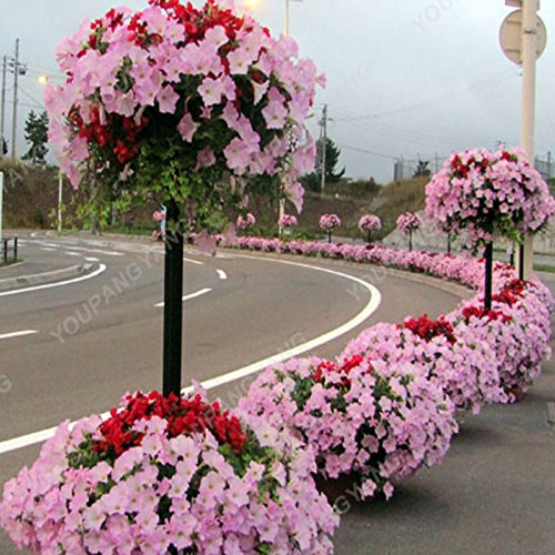 200 pcs/sac Petunia Graines Bonsaï Graines de fleurs Court Taille Jardin Fleurs Graines d'intérieur ou extérieur Plante en pot Livraison gratuite Vert