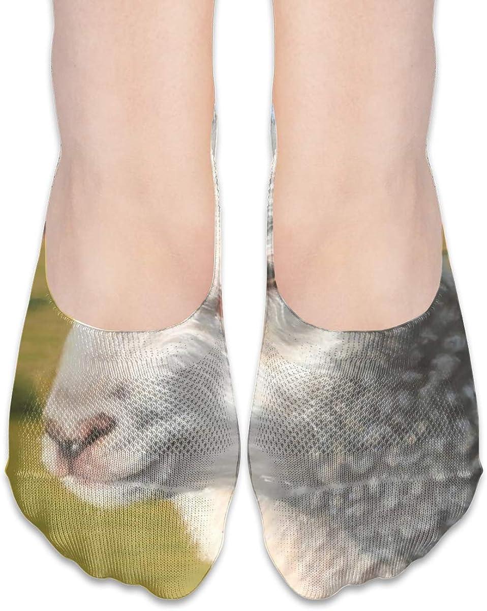 Personalized No Show Socks With Sheep Lamb Farm Animal Print For Women Men