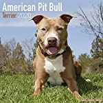 American Pit Bull Terrier Calendar - Dog Breed Calendars - 2019 - 2020 Wall Calendars - 16 Month by Avonside (Multilingual Edition) 3