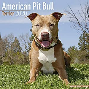 American Pit Bull Terrier Calendar - Dog Breed Calendars - 2019 - 2020 Wall Calendars - 16 Month by Avonside (Multilingual Edition) 50