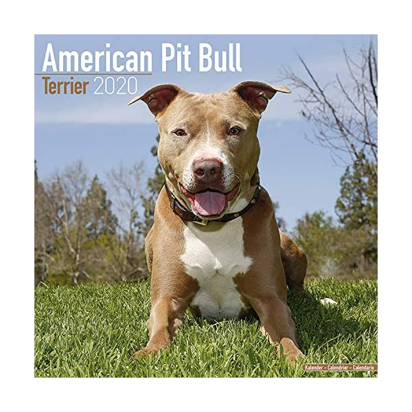 American Pit Bull Terrier Calendar - Dog Breed Calendars - 2019 - 2020 Wall Calendars - 16 Month by Avonside (Multilingual Edition) 1