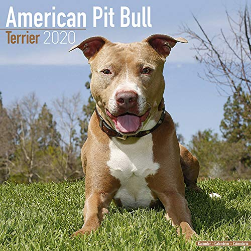 American Pit Bull Terrier Calendar 2020