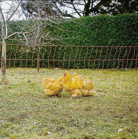 Kerbl Filet À Volailles Poultrynet Orange,...