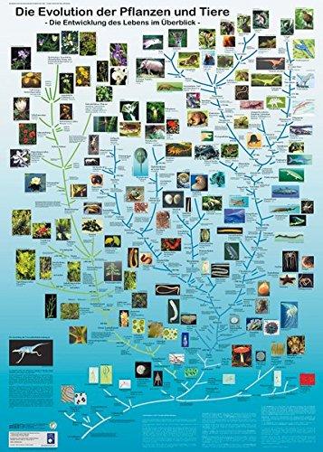 Die Evolution der Pflanzen und Tiere: Die Entwicklung des Lebens im Überblick (Planet-Poster-Box)