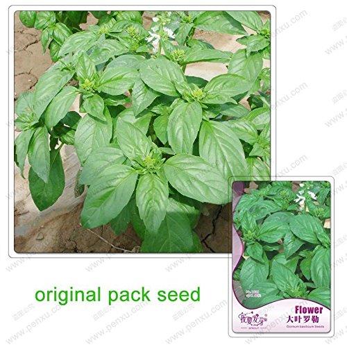 60 graines / Pack, grandes feuilles de basilic, les plantes en pot facile à cultiver fleurs jardin assaisonnement de graines d'insectes