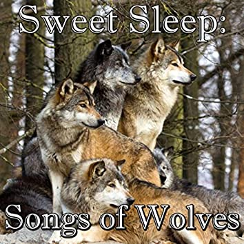 Sweet Sleep: Songs of Wolves