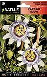 Semillas de Flores - Pasionaria Trepadora - Batlle