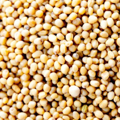 神戸アールティー イエローマスタードシード 250g Yellow Mustard Seed マスタード ホール スパイス ハーブ 香辛料 調味料 業務用