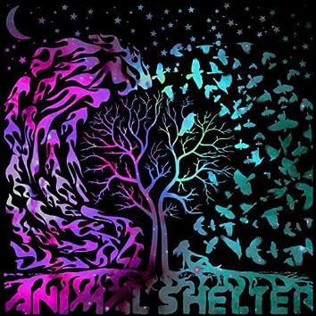 Animal Shelter EP