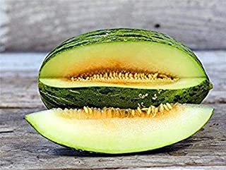 Piel de Sapo Melon Seeds - Flesh has an amazing texture that is rich & SWEET!!!!(10 - Seeds)