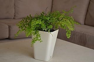 Maceta de autorriego Hidro+z en cerámica ecológica cuadrada - Maceta inteligente para todo tipo de plantas