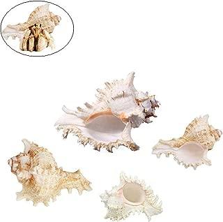 Best empty hermit crab shells Reviews