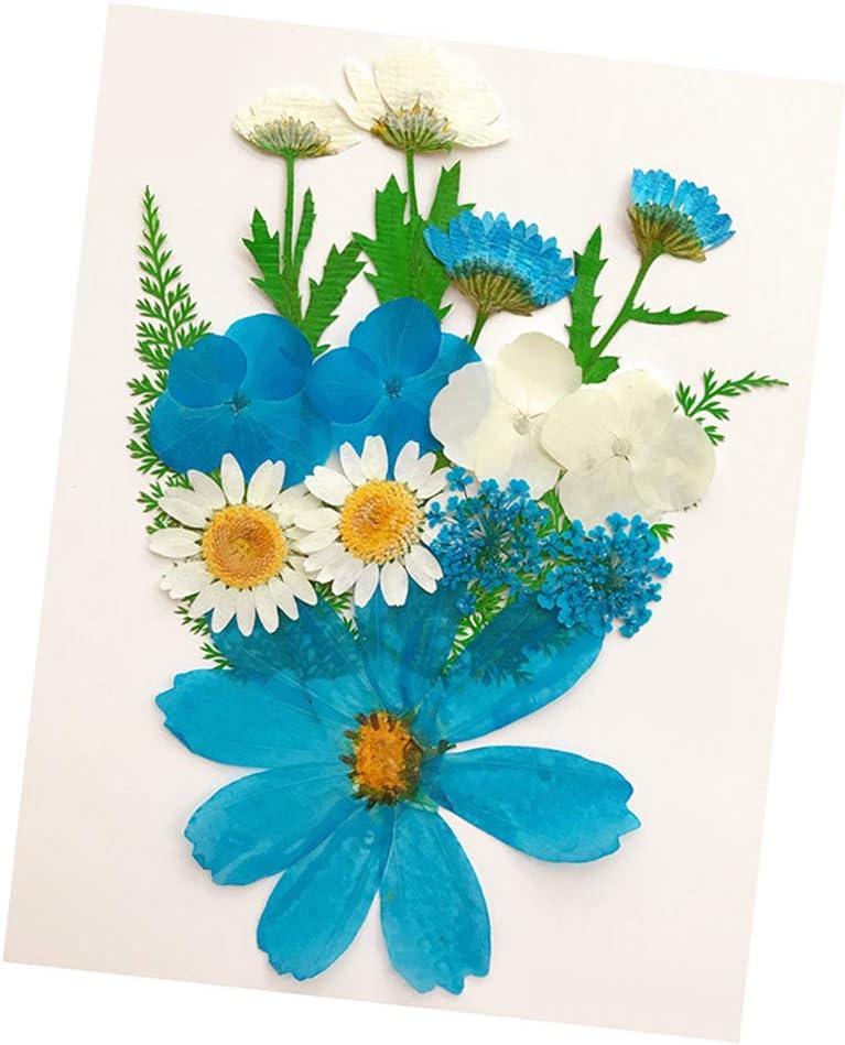 Baoblaze 13//14 A 15Pcs Nat/ürliche Blumen Bl/üten Getrocknete Gepresste Bl/ätter F/ür Schutzh/ülle Handyh/ülle Case