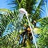 Bestway 58307 Doccia Wet 'N Go per Scalette #5