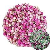 TooGet Getrocknete Gomphrena globosa Blume, Natürliche Kugel Amaranth Blume Großhandel Beste für...