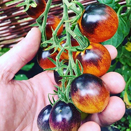 Tomate Saatgut nach Sorten, je 10 Samen -Kostenloser Versand- (Black Krim)