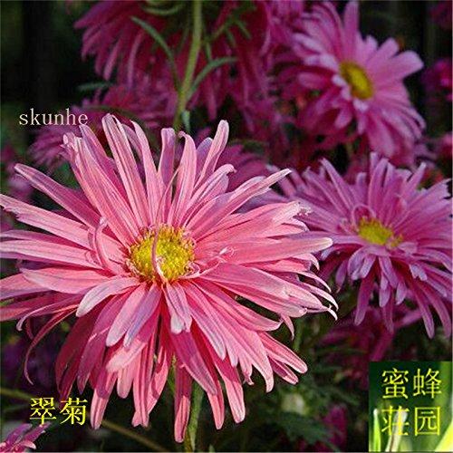 semences Aster graines de fleurs de vanille Variété de la cire turquoise Jiangxi graines chrysanthème environ 100 graines 2