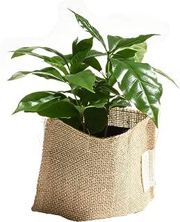 プチプラお値打ち スタンダード麻シリーズ【選べるミニグリーン】 (コーヒーの木)
