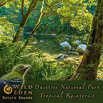 Daintree National Park - Tropical Rainforest (feat. Dr Eric Fassbender)