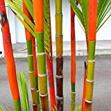Auntwhale 100 piezas de semillas de bambú de bambú de color