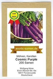 "violette mittelspäte /""Urmöhre/"" mit besonders süßem Geschmac Möhre Purple Sun F1"