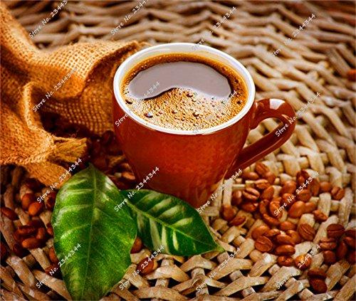 15pcs/sac exotiques café Bean Graines Indoor Tropical Bonsai Fruit Arbre en pot Jardin des plantes ornementales pour la fleur Pot Planters