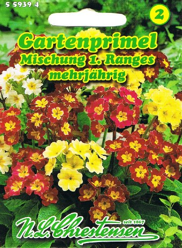 Primel Gartenprimel Mischung 1.Ranges Primula elatior mehrjährig