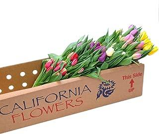 fresh tulips wholesale