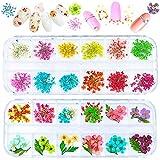 FANDE Flores secas 3D Nail Art Stickers Decoración,Uñas 3D Apliques,3D Nail...