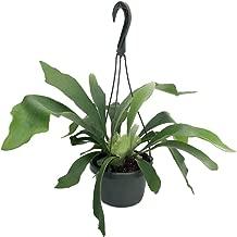 Best large exotic house plants Reviews