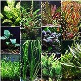 Florida 10 Species Live Aquarium Plants Bundle