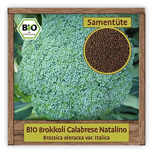 BIO Brokkoli Samen Broccoli Gemüse Saatgut alte italienische Sorte Calabrese