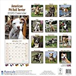 American Pit Bull Terrier Calendar - Dog Breed Calendars - 2019 - 2020 Wall Calendars - 16 Month by Avonside (Multilingual Edition) 4