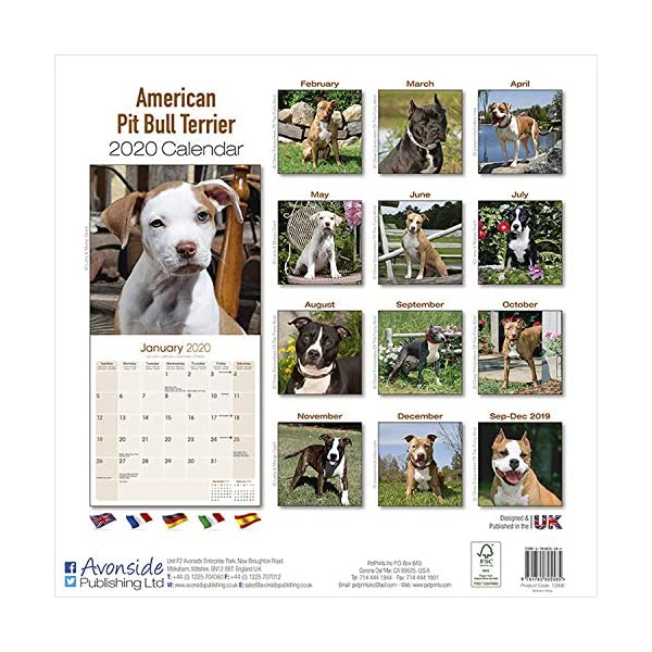 American Pit Bull Terrier Calendar - Dog Breed Calendars - 2019 - 2020 Wall Calendars - 16 Month by Avonside (Multilingual Edition) 2