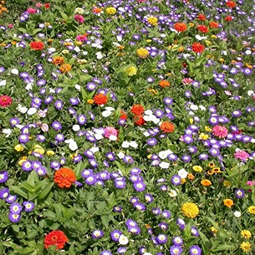 Mélange de fleurs Tom Pouce (tapissant) 2 grammes - +/- 600 graines