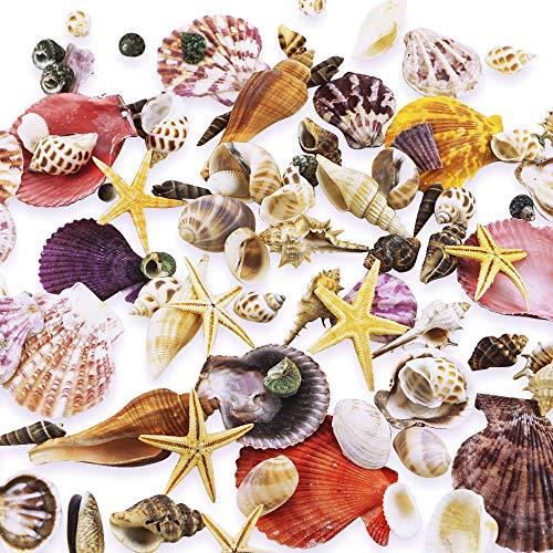 WFPLUS 200+pcs Sea Shells Mixed Ocean Beach Seashells, Various Sizes Natural Seashells Starfish for Fish Tank, Home Decorations, Beach Theme Party, Candle Making, Wedding Decor, DIY Crafts